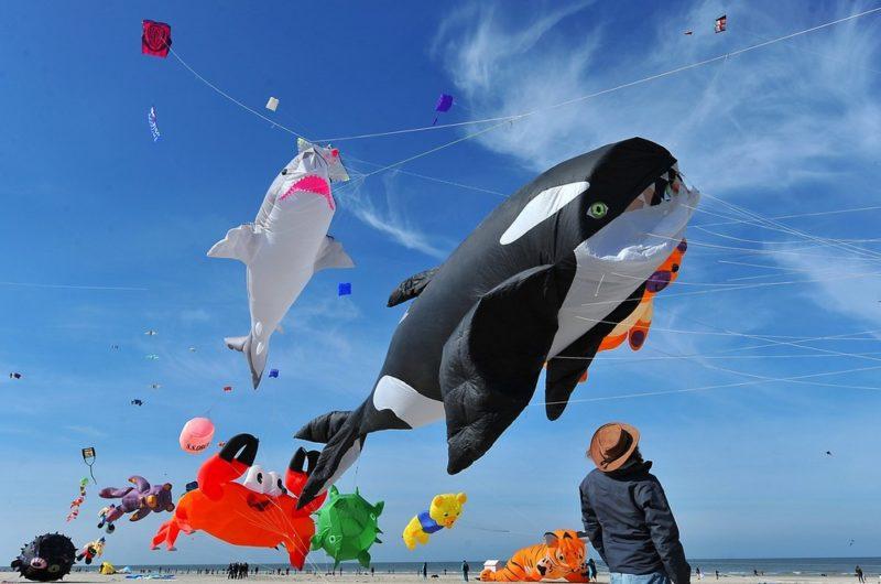 Человек на пляже наблюдает за воздушными змеями в форме касатки, акулы, краба, медведи и пингвина