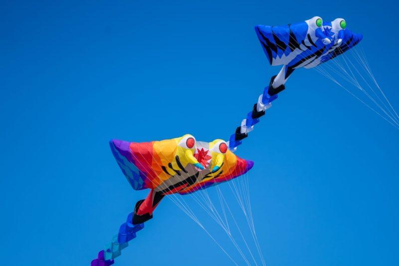 Воздушные змеи в форме манты на фоне голубого неба